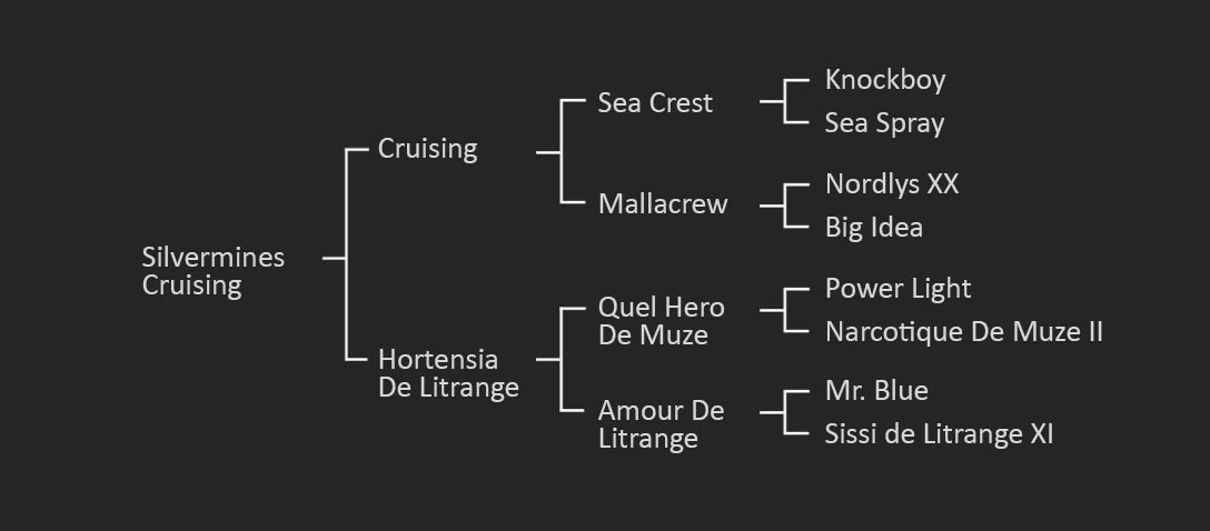 The pedigree of Silvermines Cruising